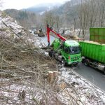 B 27: Baumfällarbeiten entlang der Odertalsperre