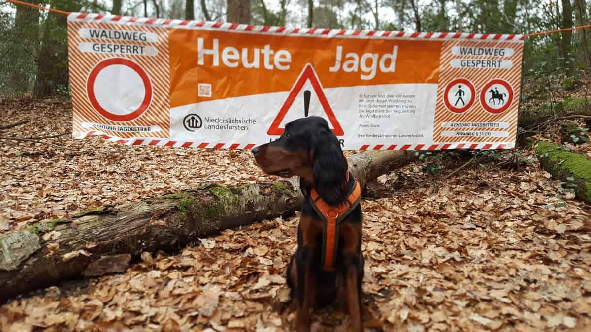Jagd in den Wäldern zwischen Eschershausen und Relliehausen - Niedersächsische Landesforsten